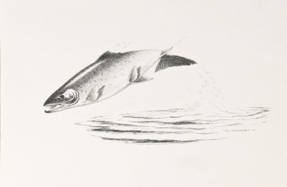 Original Pencil Drawings for 'Angling for for Atlantic