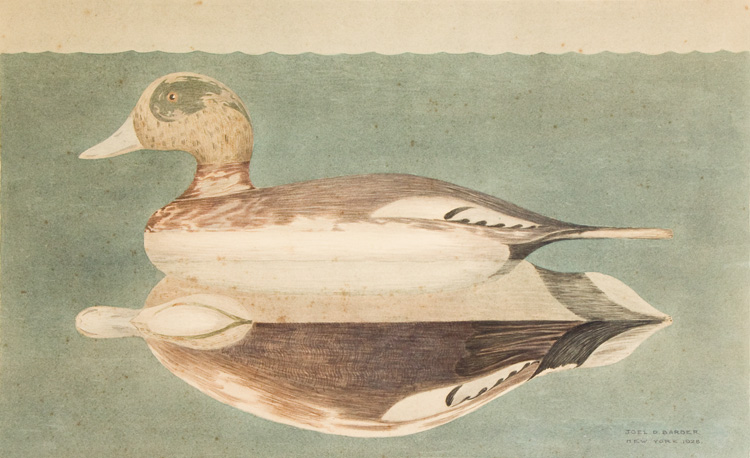 Male Widgeon Decoy: watercolor of a Stevens Factory decoy. Joel D. Barber.
