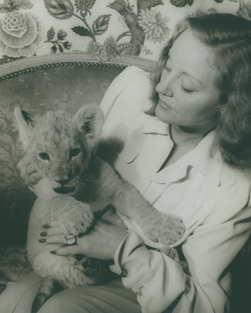 Portrait photograph of Tallulah Bankhead, with her lion cub Winston Churchill. Tallulah Bankhead, Carl Van Vechten.