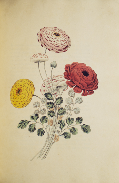 Groups of Flowers (Groups of Fruit, Six Birds) drawn and accurately coloured after nature, with full directions for the young artist; designed as a Companion to the treatise on flower painting. George Brookshaw.