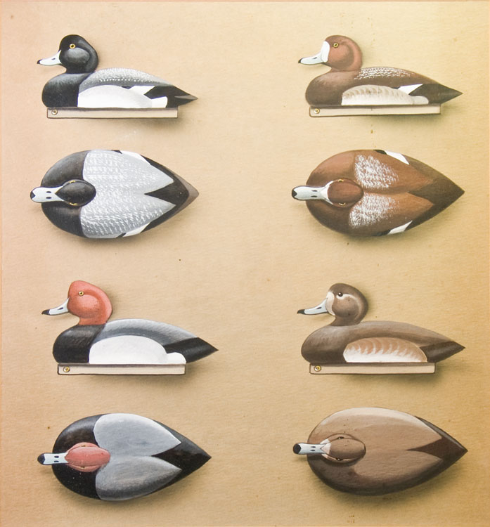 Color Patterns for Decoys [Mallards, Pintails, Blackduck, Green-Winged Teal; Canada Goose, Brant, Widgeons, Surf Scooters, American Scooters; Broadbills, Redheads, Canvasbacks, Goldeneyes]. Edgar Burke.