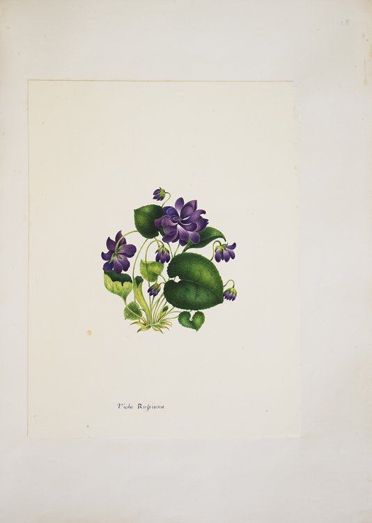 Album of original watercolors of flowers