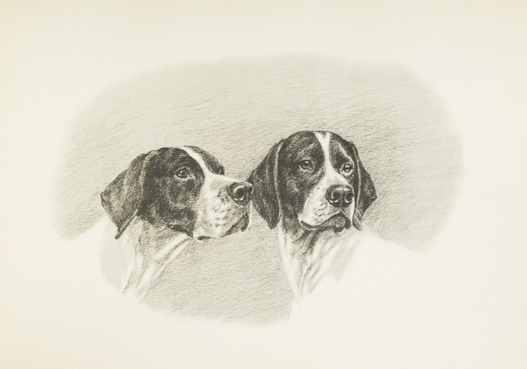 Dogs in the Field ... Foreword by John Taintor Foote. Marguerite Kirmse.