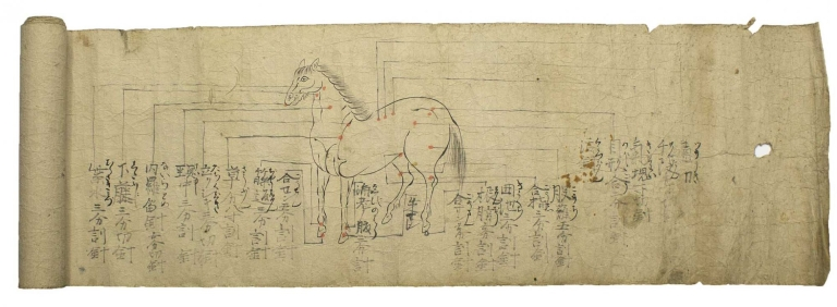 Manuscript Scroll for horses doctors with anatomical sketches. Veterinary Medecine.
