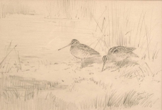 FINE PENCIL DRAWING OF A PAIR OF SNIPE, signed and titled at lower right. Roland Green.