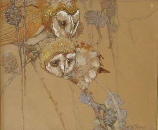 Two Barn Owls on a Pine Branch. Kay Nixon