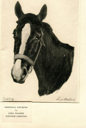 "Portrait of Horse ""Tobbey."" Lisa Balsie."