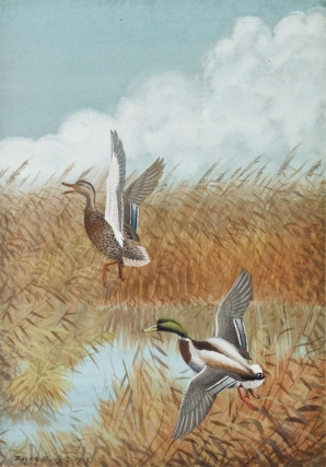 Gouache of male and female mallard ducks flying over marshland, sky and clouds in the distance....