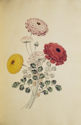 Groups of Flowers (Groups of Fruit, Six Birds) drawn and accurately coloured after nature, with...