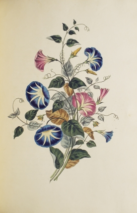 Groups of Flowers (Groups of Fruit, Six Birds) drawn and accurately coloured after nature, with full directions for the young artist; designed as a Companion to the treatise on flower painting
