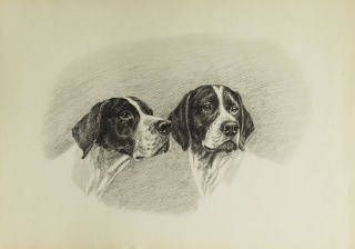 Dogs in the Field ... Foreword by John Taintor Foote