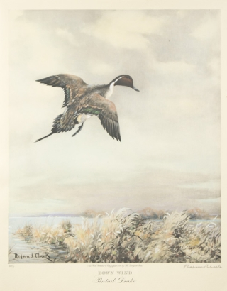 """Down Wind. Pintail Drake."" Roland Clark."