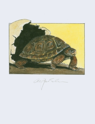 Tortoises. Six Poems by D. H. Lawrence … With an Introduction by Jefferson Hunter. Cheloniidae...