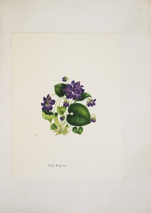 Album of original watercolors of flowers. Amateur Art, Emma White.