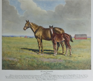 [Thoroughbred Portraits: Album of 9 Equestrian Portraits by Stainforth and others]