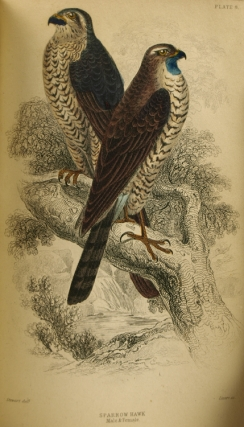 The Naturalist's Library. Ornithology