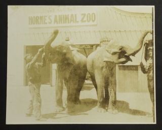 Report on Horne Zoological Corporation