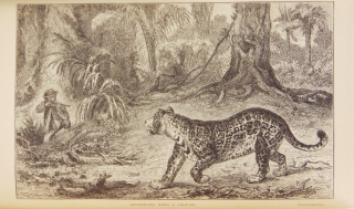 The Naturalist in Nicaragua: a Residence at the Gold Mines of Chontales; Journeys in the Savannahs and Forests with Observations on Animals and Plants in reference to the Theory of Evolution of Living Forms