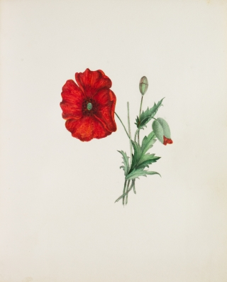 Flowers: A Series of Short Poems, original and translated: illustrated with figures drawn and coloured by Aza Curtis