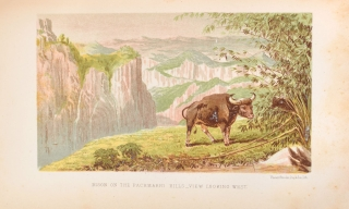 The Highlands of Central India. Notes on Their Forest and Wild Tribes, Natural History, and Sports