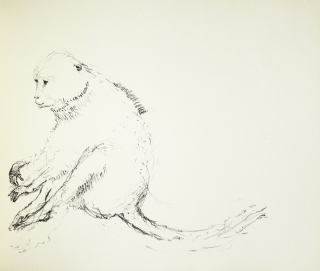 Natural History [Edited and Translated by Philip Hofer]. Lithographs [by] Walter Stein